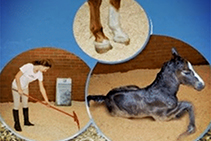 Sustainable Hemp Animal Bedding from Sherwood Enterprises