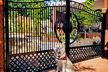 Wrought Iron Gates - Sydney Showroom with AWIS