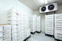 Keep a Well-Insulated Interior with Expanded Polystyrene Blocks by Foamex