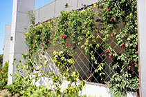 Beautiful Green Walls with Security from Miami Stainless