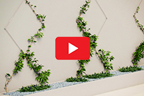 Green Walls Using Jaw Swage Bottlescrews by Miami Stainless