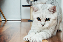 Pets and Timber Floors - Floor Care Tips from Polycure