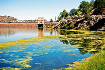 Remove Algae from Dams with Bio Natural Solutions
