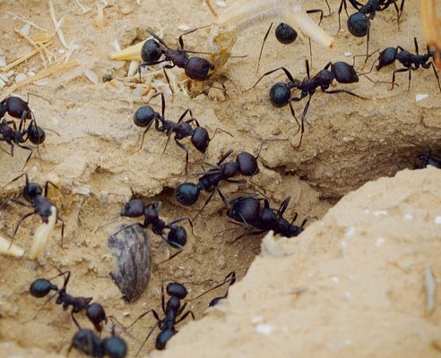 Ant control from Exopest