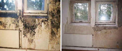Eco-friendly treatment of mould from Livos