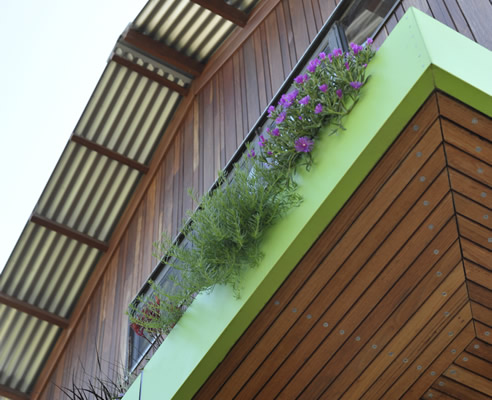 green eave watered through runoff from the roof