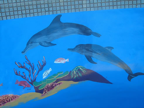 dolphin pool resurface