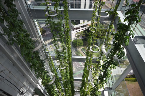 Vertical Garden Green Sculptures Ronstan Tensile
