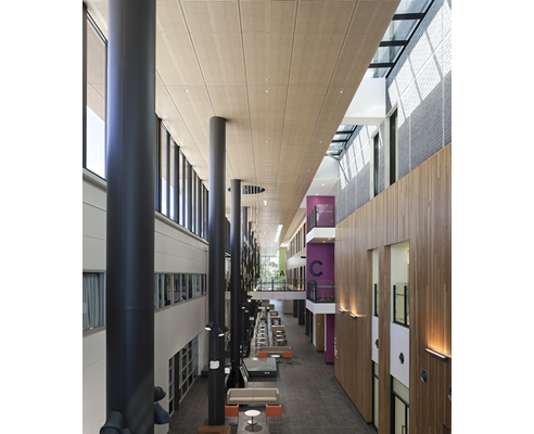timber acoustic panels hospital atrium