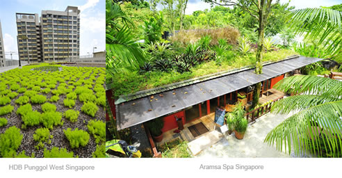 Sustainable Green Roof System Elmich Australia Newington